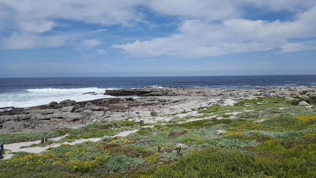 Beautiful views of the ocean and fynbos