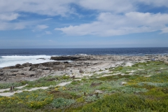Beautiful views of the ocean and fynbos